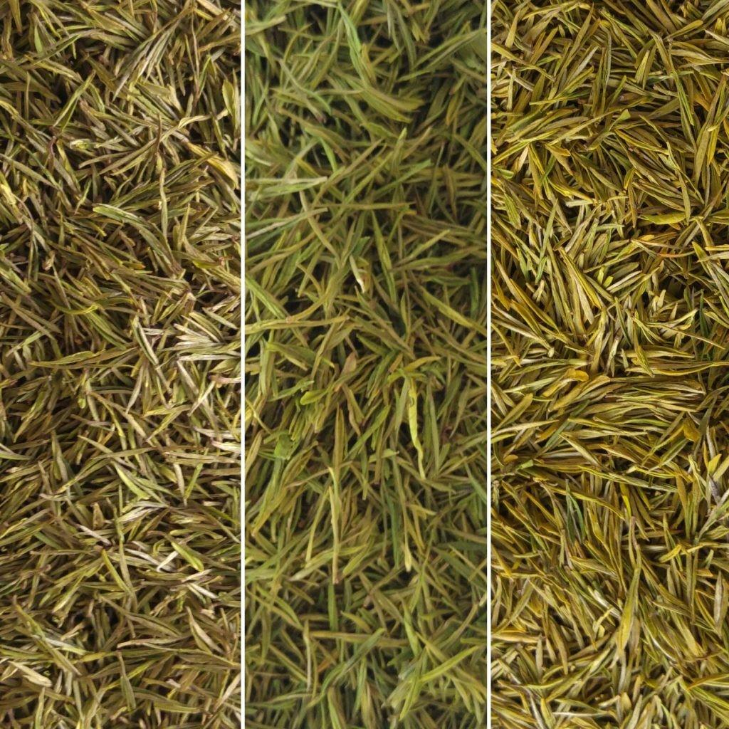 Le tre cultivar: la Bai Ye al centro, la Huang Jin Ya a sinistra e la Huang Jin Ye a destra.